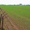 Farmland at Rise