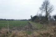Fields, Caistor St Edmund
