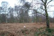 West Haigh Wood