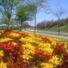 Floral Displays in Aberdeen