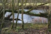 Iddesleigh: on the bank of the Torridge