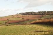 Fields of  Rixdale, near Luton, Devon