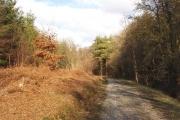 Zig-zag wood, Mamhead Forest