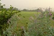 Hedgerow near Cranesden Farm