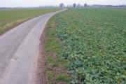 Farmland at SE774253