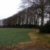 Woodland west of Swanland