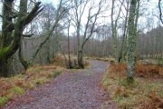 Woodland track by the River Roy