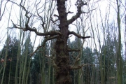 Woodland, Swinley Park