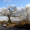 Trees and Roundabout by Tesco Eastgate centre