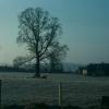 Knathorn farm home paddock
