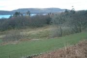Woodland near Daltote Cottage