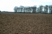 Across Ploughed field to un-named wood