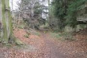 Path Through Anston Stones Wood