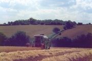 Harvest time at Rudwick Hall