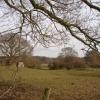Farmland Nr Little Common East Sussex
