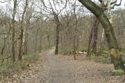 Path in Hawksworth Wood