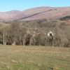 Drumfad Farm