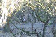 Looking down into Hawksworth Wood