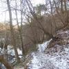 Woods beside River Derwent, nr Hathersage