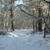 Dornoch - Earls Cross Wood