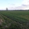 Field Hedge Boundary