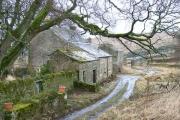 Whiteley Shield Farm
