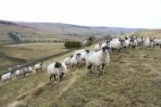 Pasture near Ayle
