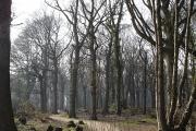 East Hoath Wood