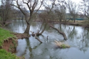 River Exe at Stafford Bridge