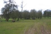 Woodland near Cladswell