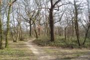 Woodland at north edge of Eltham Park, Kent