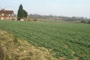 Fields west of Michelmersh