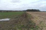 Farmland and small wood at Whinmoor.