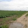 Farm track on Morton Fen