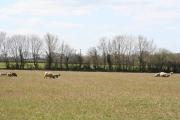 Broadhembury: field by Egremont Cross
