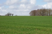 Winter sown crops, Moreton