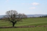 Uffculme: pasture near Southill Cross