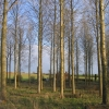 Trees at Low Common
