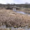 Monkland Canal with Bulrushes