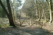 Woodbank at Rowlands Wood