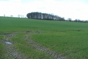 Farmland and small wood S of Rothwell.