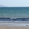 Gulls take to flight Carradale Bay.