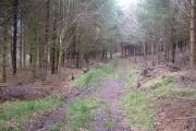Woods near Ausewell Rocks