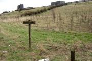 Coathill Farm Woodland