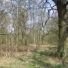 Stowe: Woodland near Charmandean School