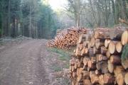 Logs in Big Covert