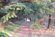 Woods on Barton Down