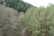 Woods seen from viaduct on Plym Valley cycle way