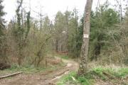 Crooklake Wood
