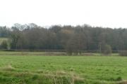 Cranham Woods